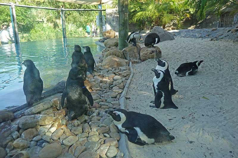 0419-busch-gardens-penguins.jpeg