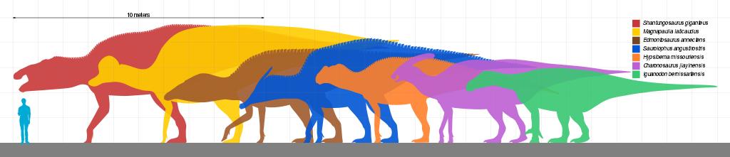 1024px-Giant_Ornithopod_Scale.svg.png