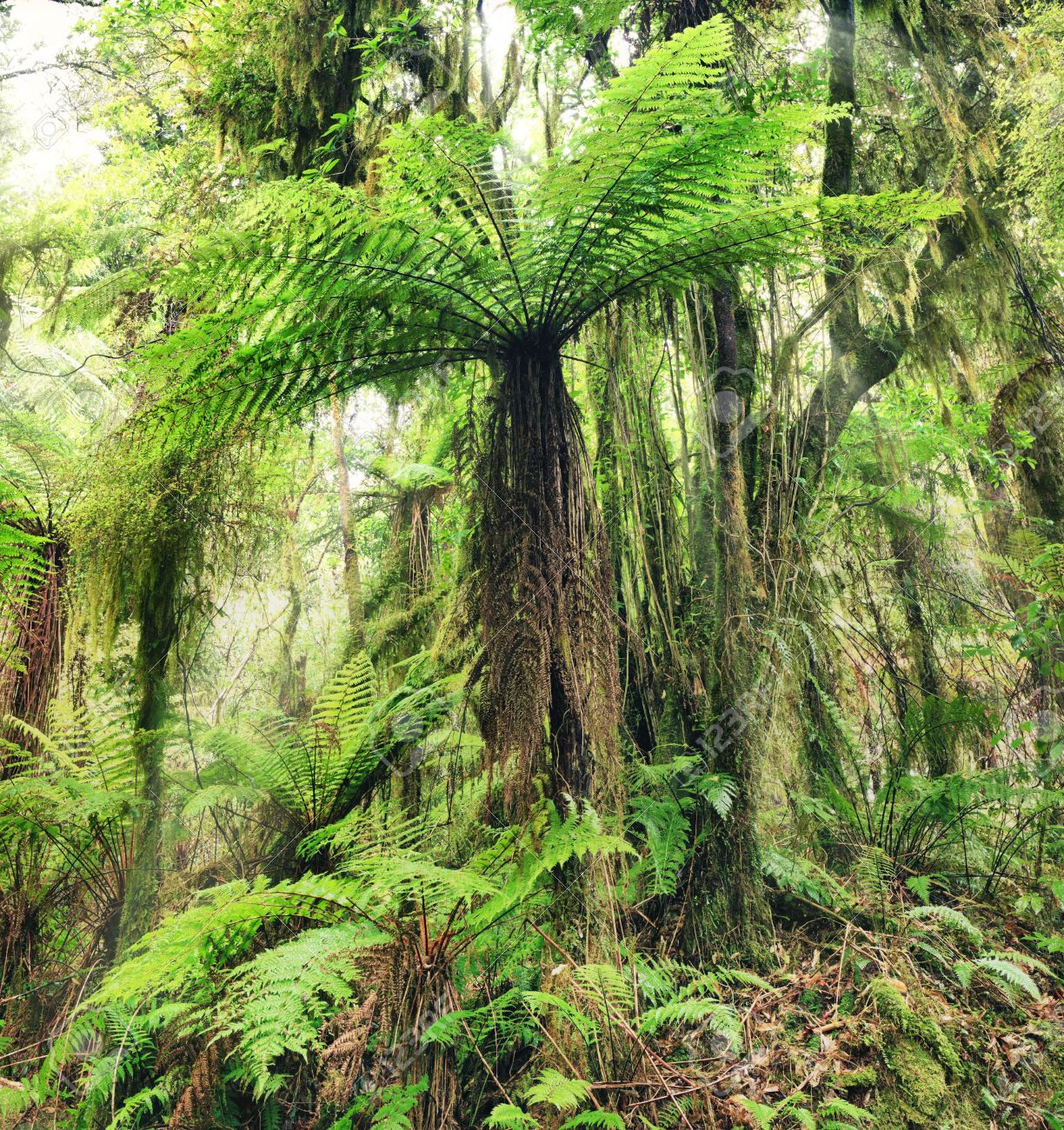 12560227-the-new-zealand-tree-fern.jpg