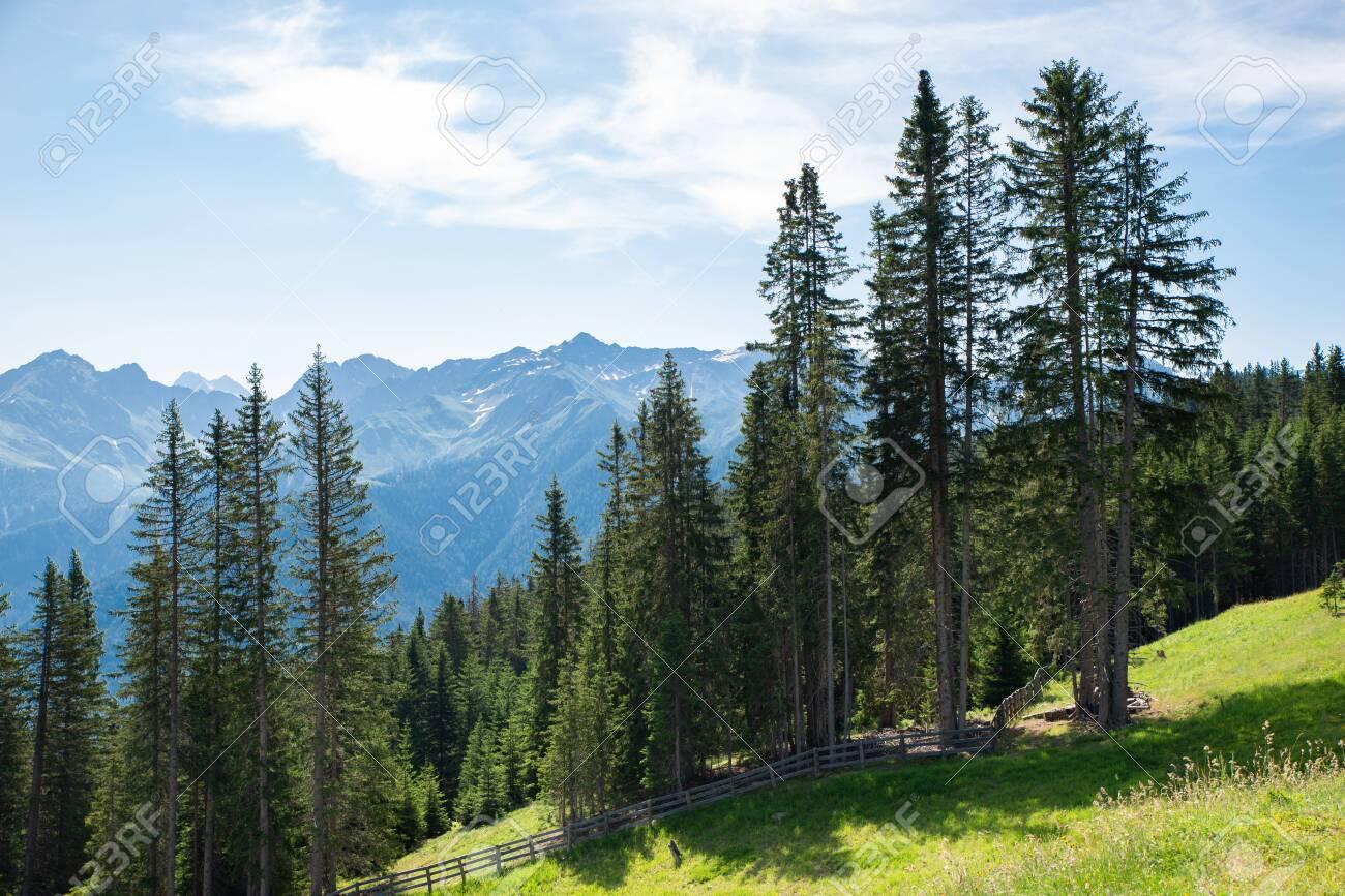 128300519-alpine-pastures-and-fir-trees-in-austria-alps.jpg