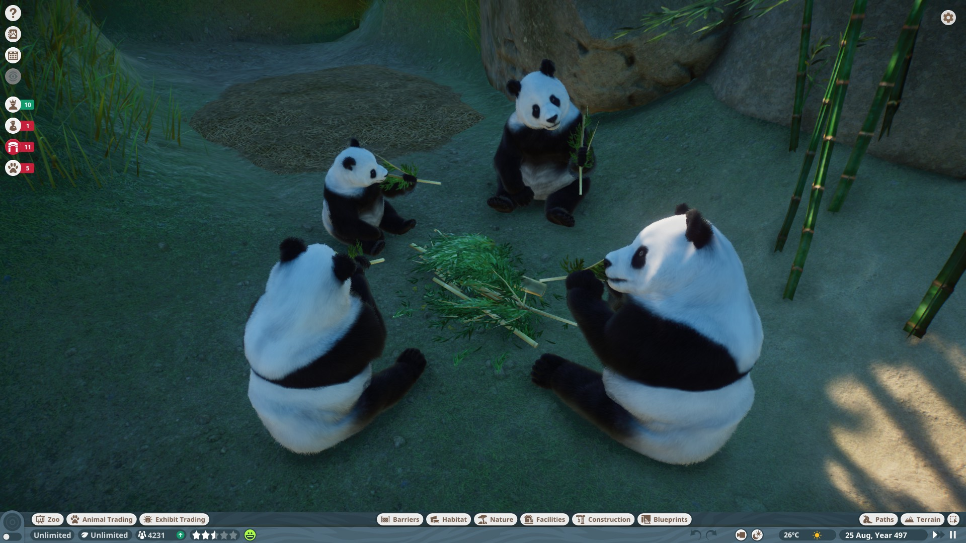 Family of pandas having lunch together, crunching on bamboo