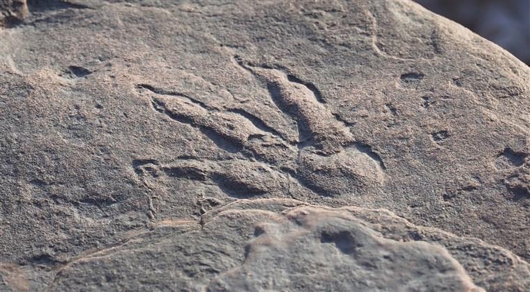 210130-grallator-footprint-al-0939_ab77854c6bcb487d4d836711a1f475ed.fit-760w.jpg