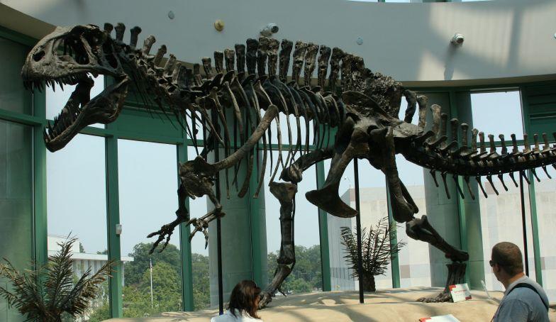 Acrocanthosaurus_skeleton_(1).jpg