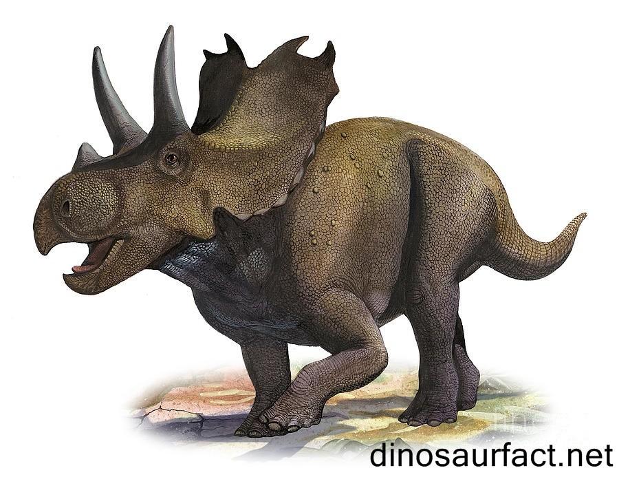 Agujaceratops2_ae35 1.jpg