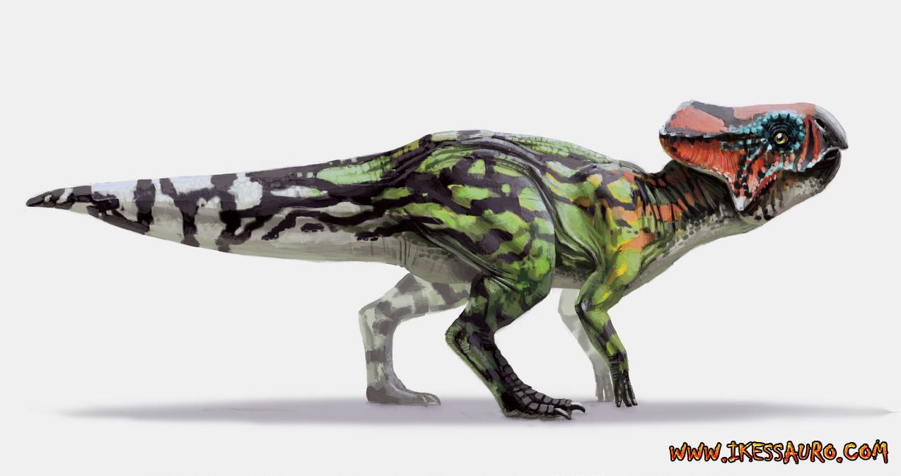 Alexander Ostrowski Microceratus.jpg