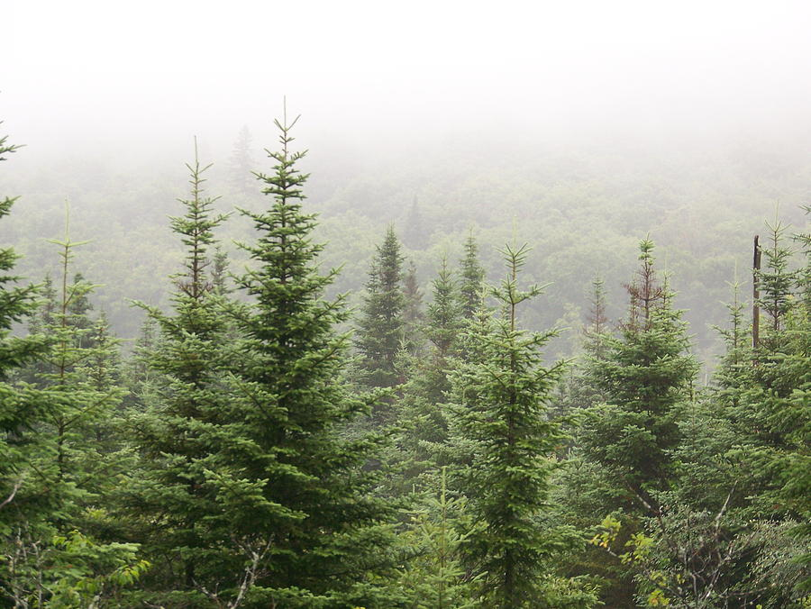 alpine-trees-robin-el-hachem.jpg