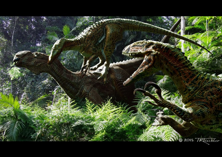 Australovenator-wintonensis-Australovenator-attacking-a-Muttaburrasaurus-Artwork-by.jpg