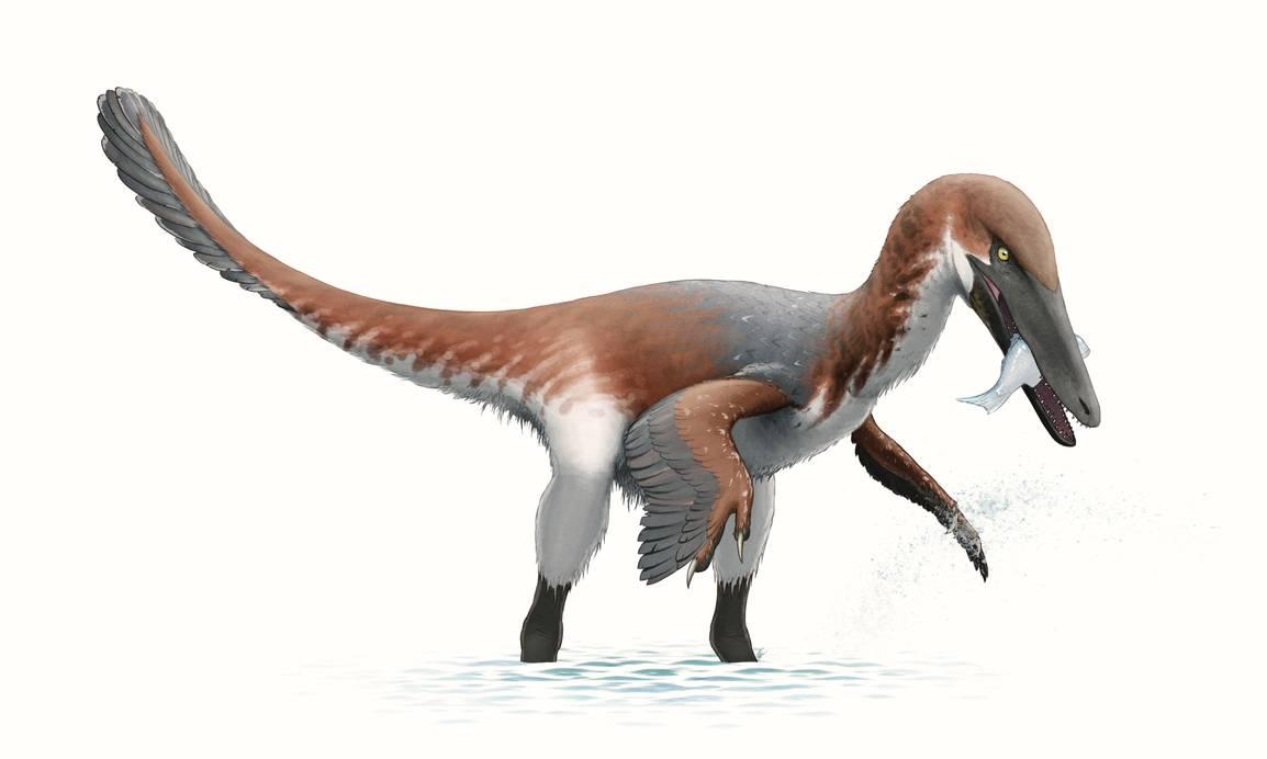 austroraptor_for_wikipedia_by_fredthedinosaurman_da5a56i-pre.jpg