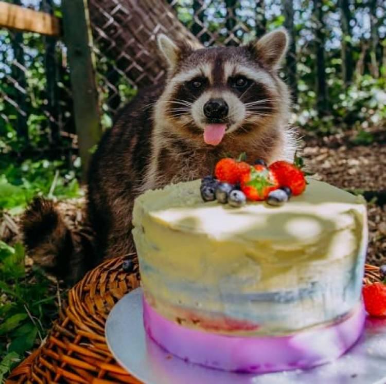 BIG-1-a-birthday-party-for-a-raccoon.jpg