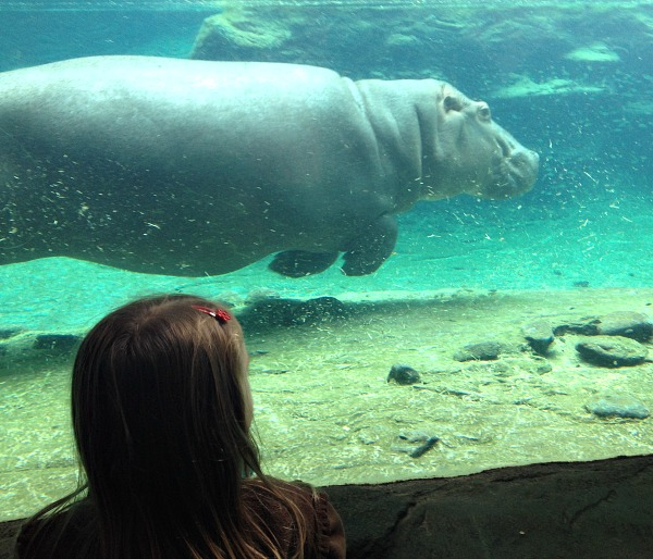 Busch-Gardens-Tampa-Animals.jpeg