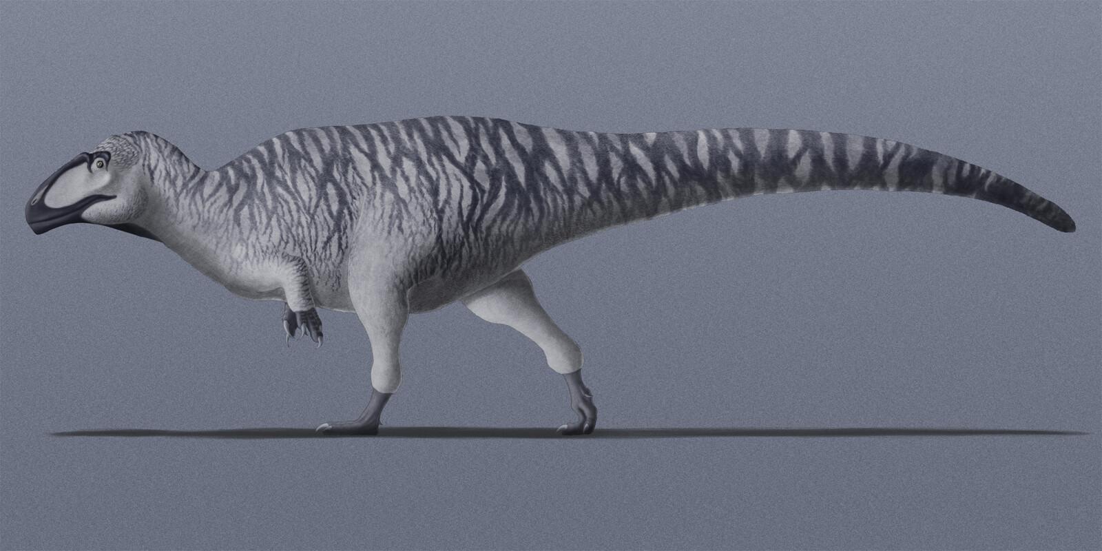caio-negri-shaochilong-maortuensis-final-2.jpg