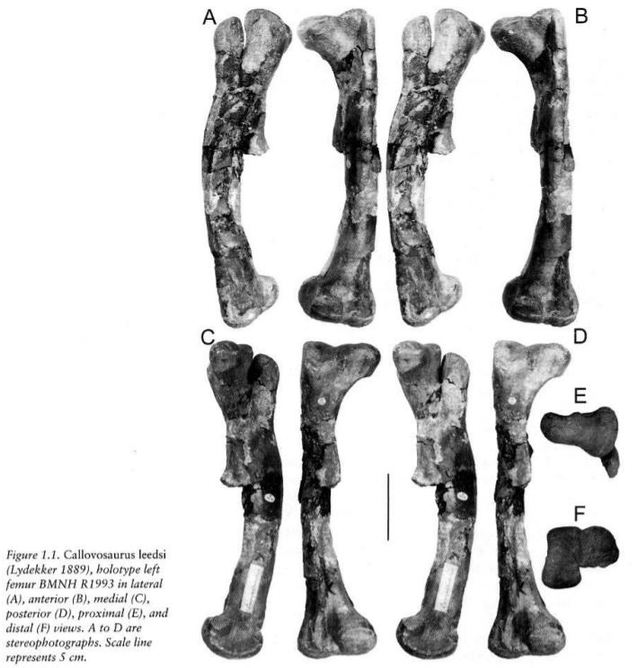 Callovosaurus.png