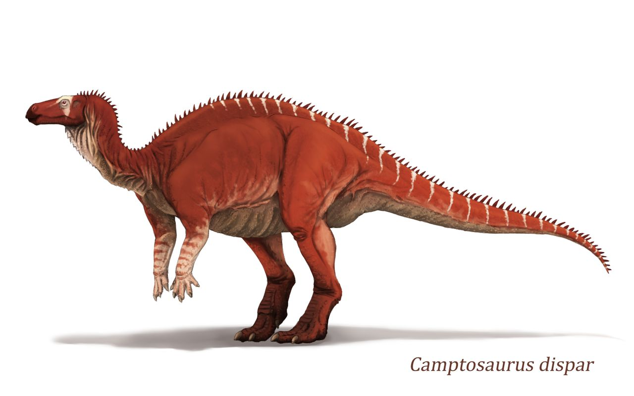 camptosaurus_by_y_forest_dd82w50-fullview.jpg