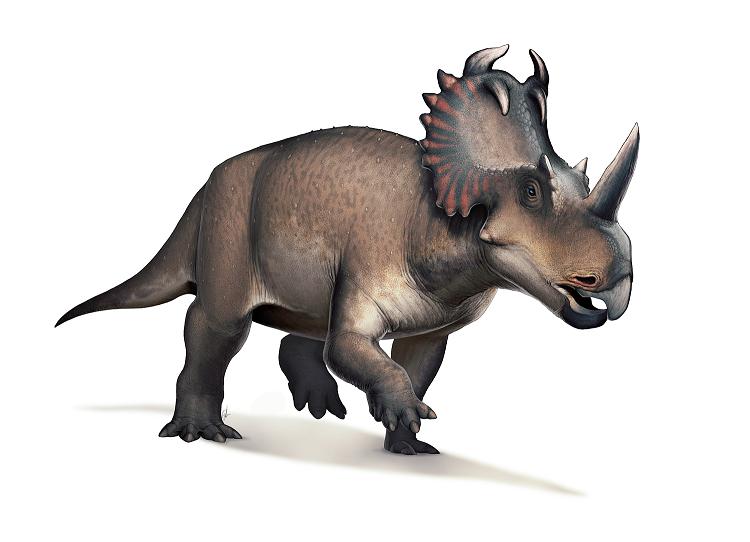 Centrosaurus - Copy.png