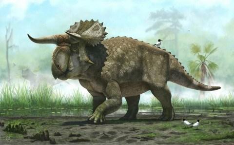 Dinosaur_Discovery-08229.jpg