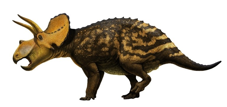Eotriceratops(3)_4deb.jpg