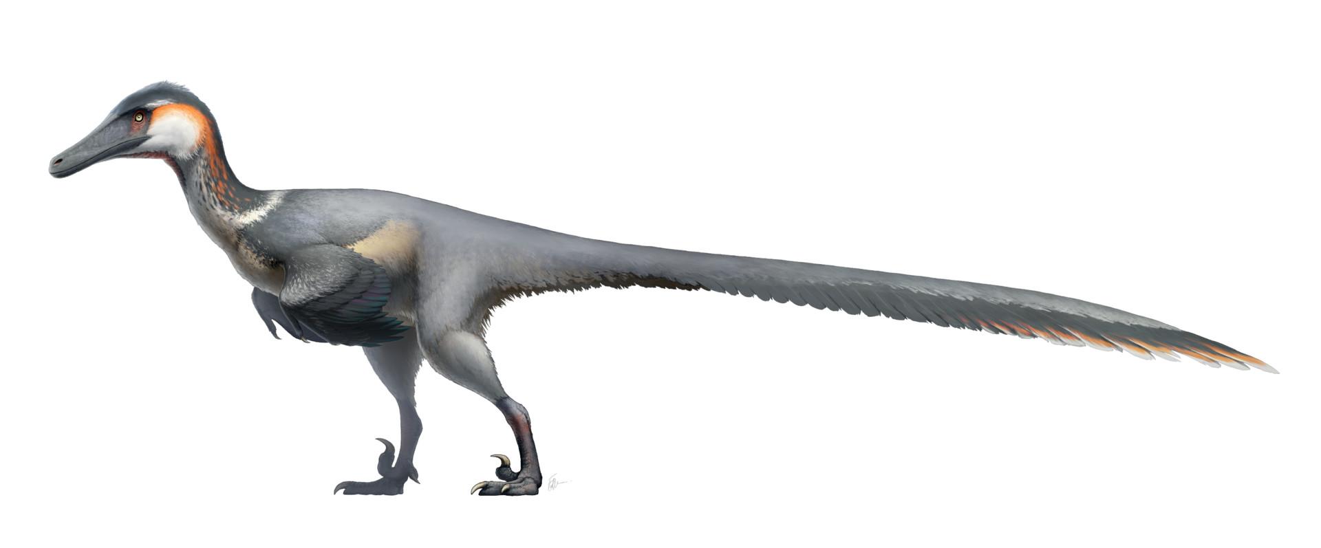 fred-wierum-dromaeosaurs-austro2.jpg