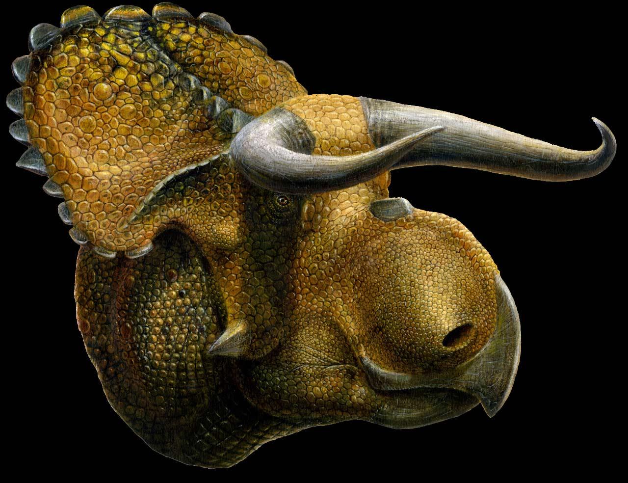 image_1237_1e-Nasutoceratops.jpg