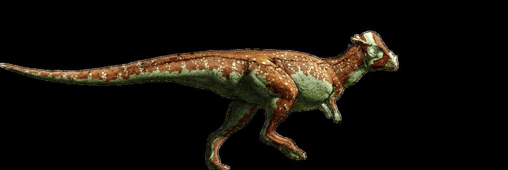 jurassic_world__pachycephalosaurus_by_sonichedgehog2_d8qh0wl-fullview.png