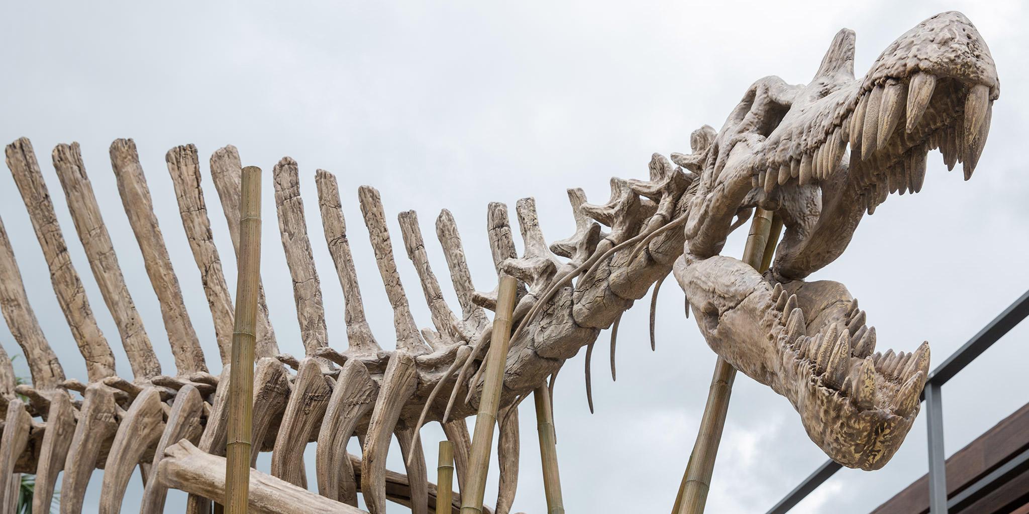 main-street-spinosaurus-skeleton.jpg