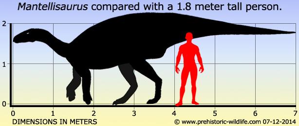 mantellisaurus-size.jpg