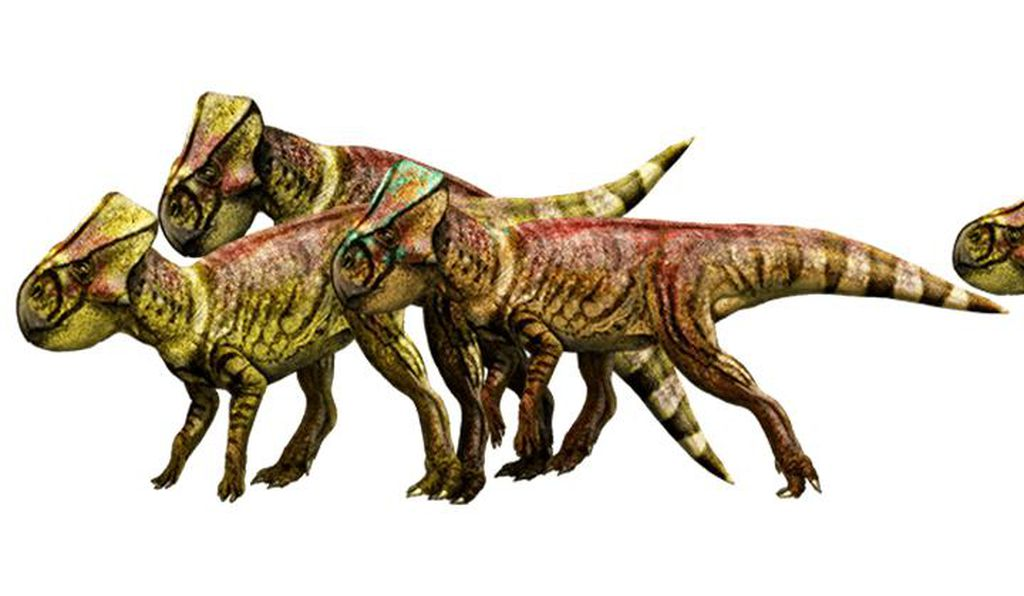 microceratus.jpg