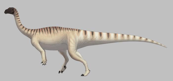 mussaurus_patagonicus__for_wikipedia__by_spinoinwonderland_ddnswa3-350t.jpg