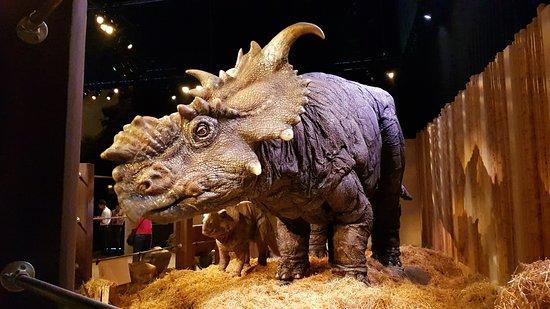 pachyrhinosaurus-and.jpg