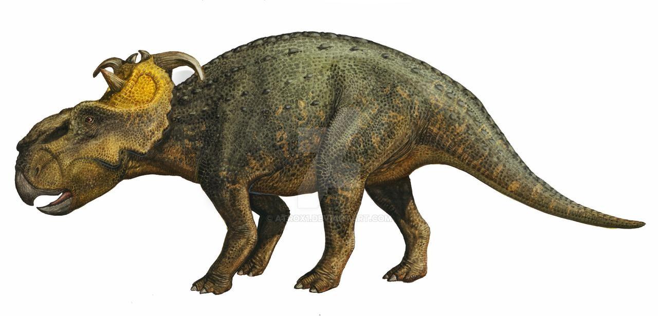 pachyrhinosaurus_canadensis_by_atrox1_d2nycr7-fullview.jpg