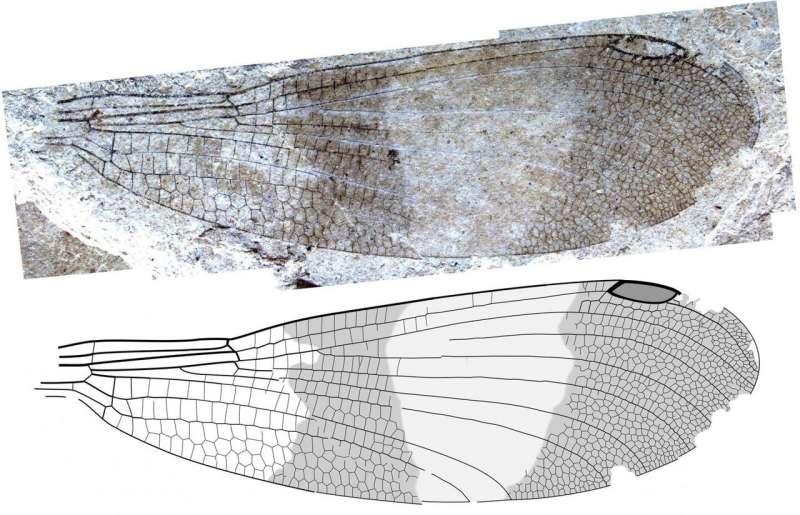 paleontologi.jpg