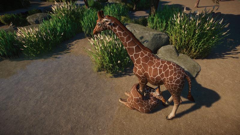 Planet Zoo Screenshot 2020.06.14 - 22.46.00.81.png