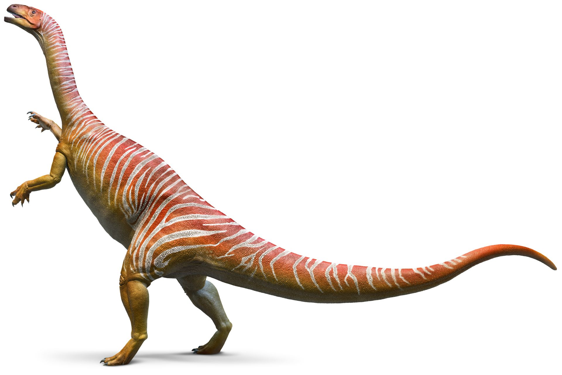 Plateosaurus_whole_bq2b8s.jpg