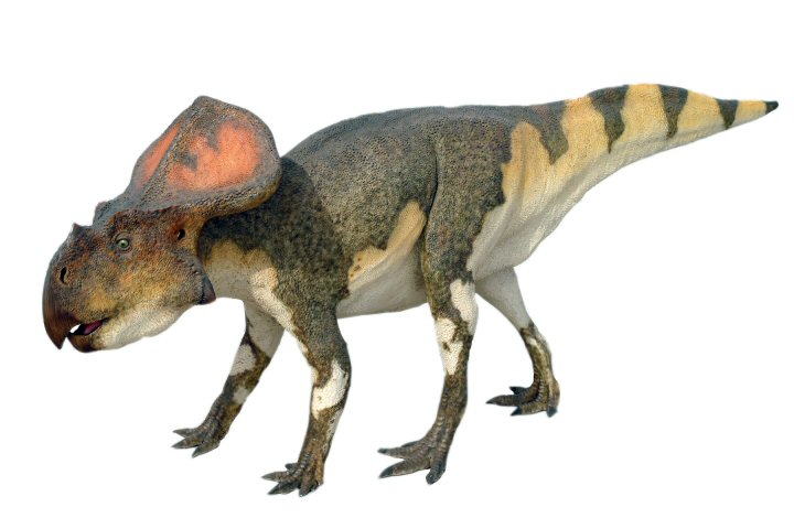 Protoceratops-Pictures.jpg