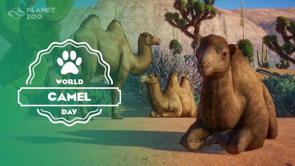 PZ_World_Camel_Day_960x540.jpg