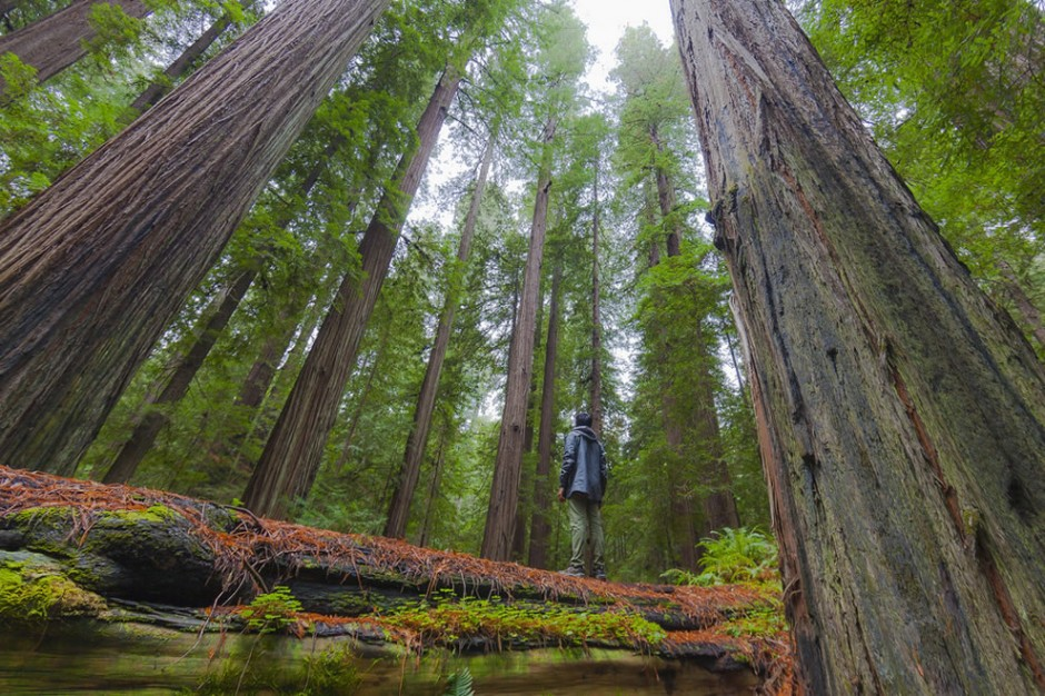 redwood-explorer-940x626.jpg