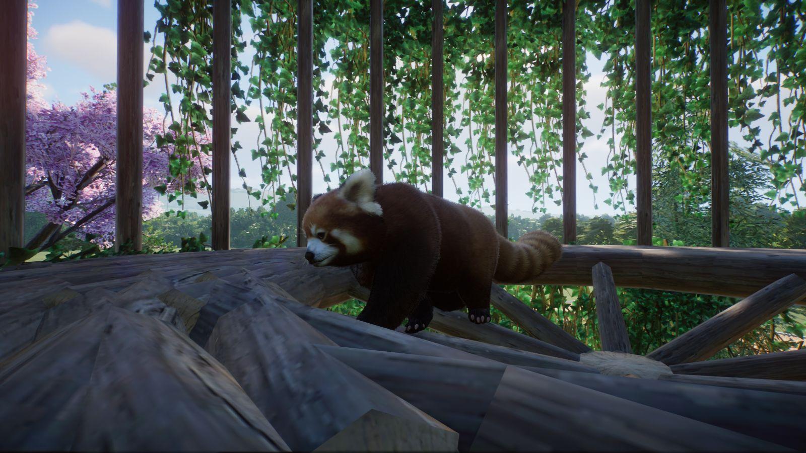 Roter Panda.jpg