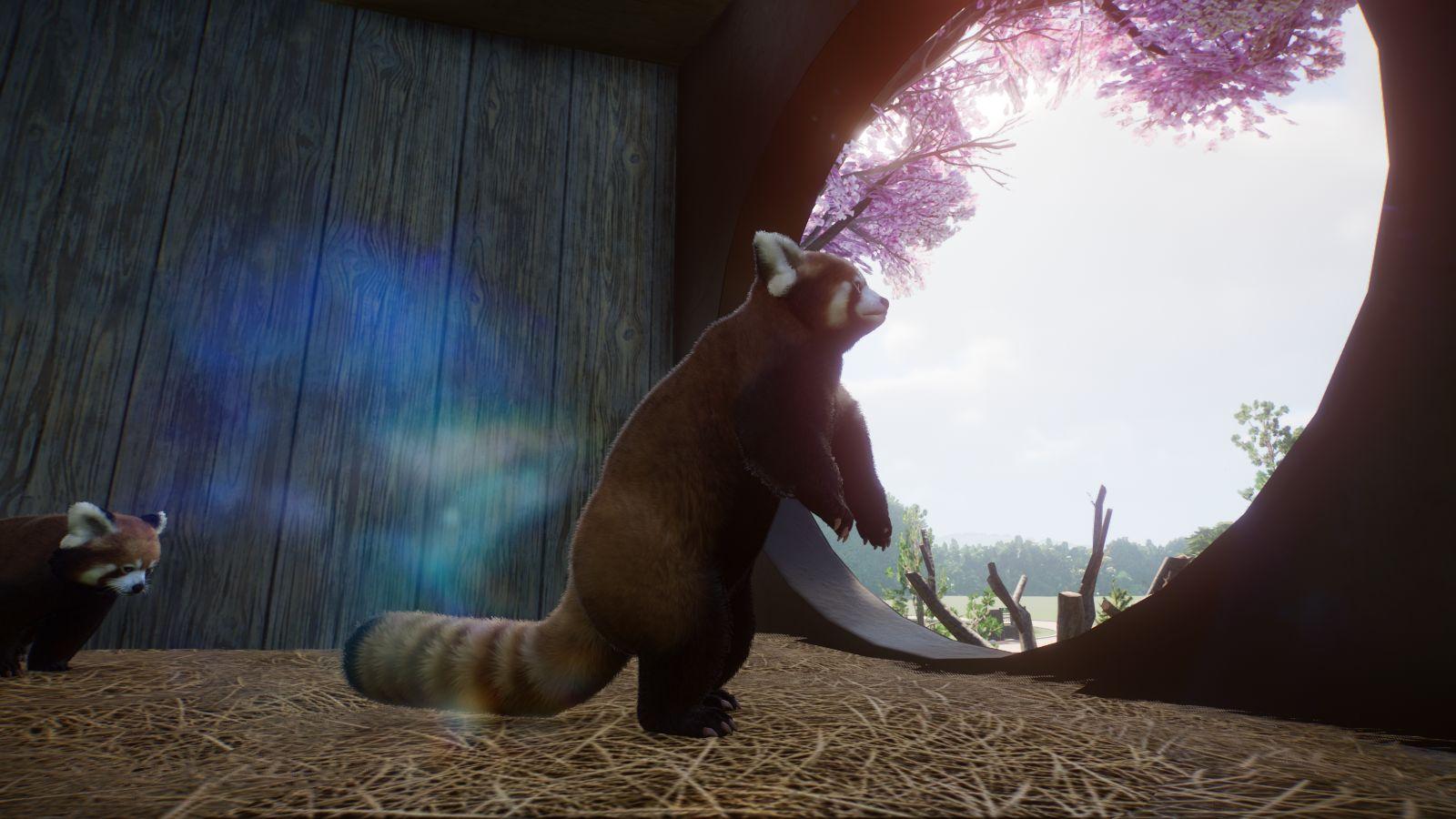 Roter Panda5.jpg