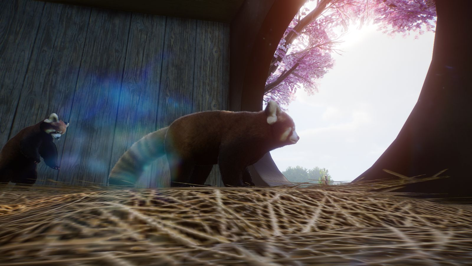 Roter Panda6.jpg