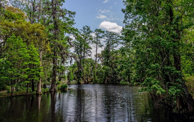 South+Carolina+Swamp+Garden.jpg