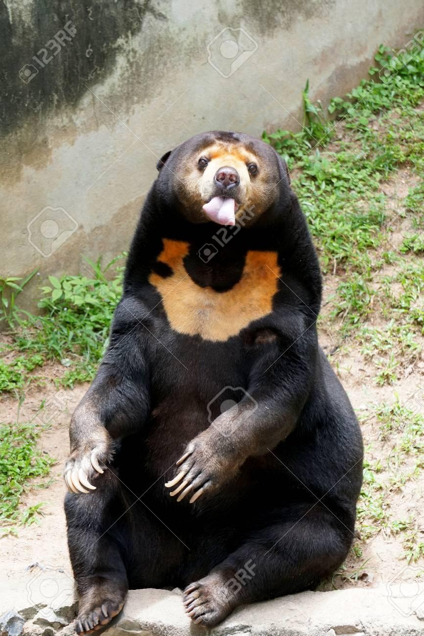 sun bear.jpg