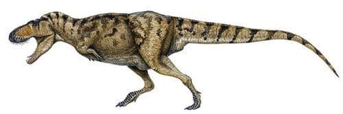 tarbosaure.jpg