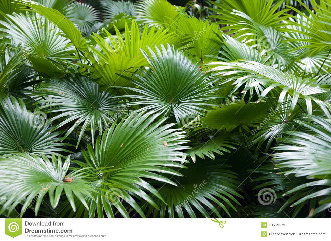tropical-rainforest-palm-background-19559173.jpg