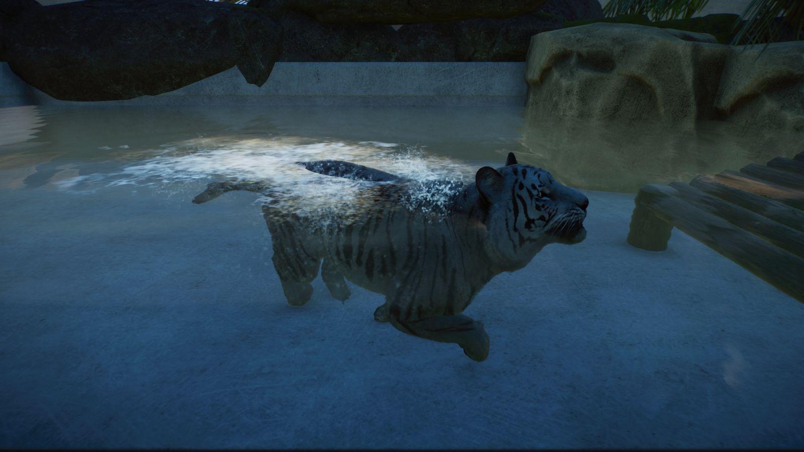 weißer Tiger3.jpg